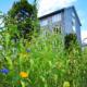 Nachhaltige Anpflanzung einer Streuobstwiese und Bienenweide im Bereich der Klinik Wittgenstein